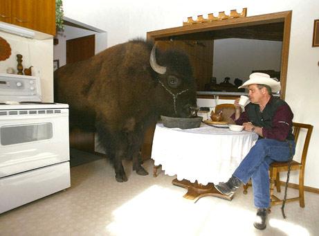 060802-buffalo_big.jpg